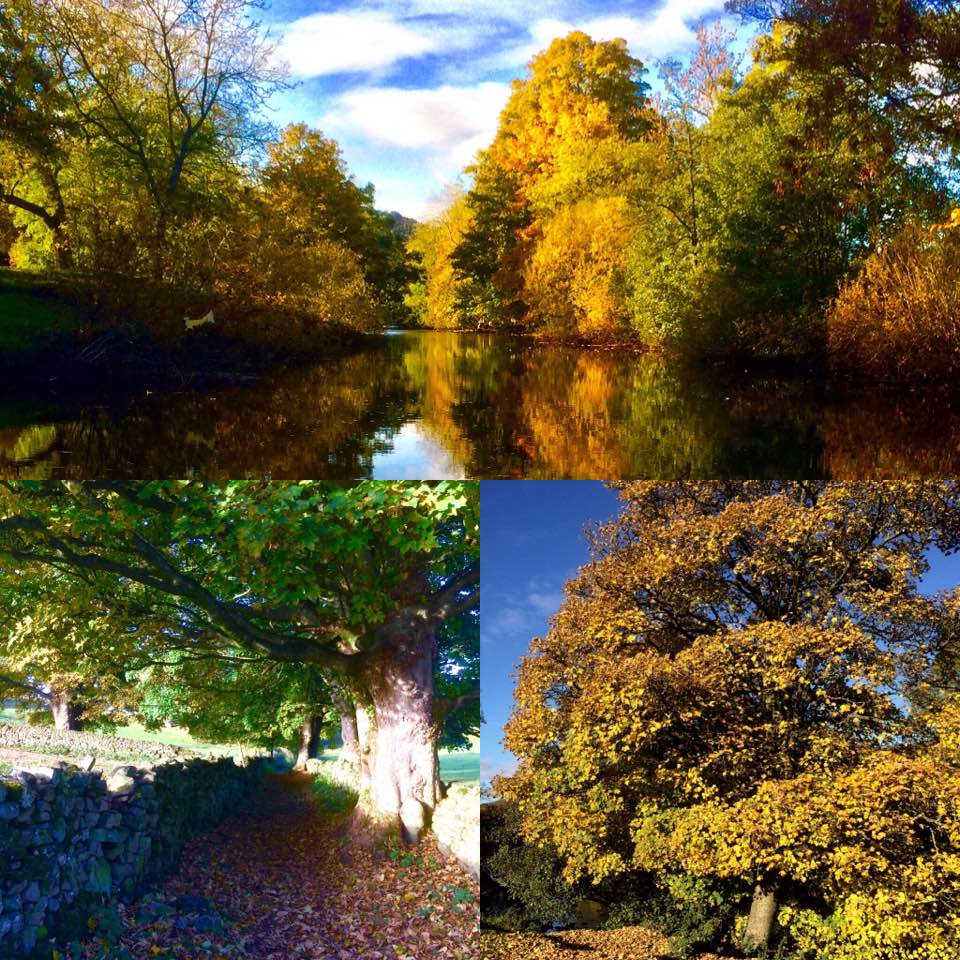 A montage of images taken at Swaleview Park