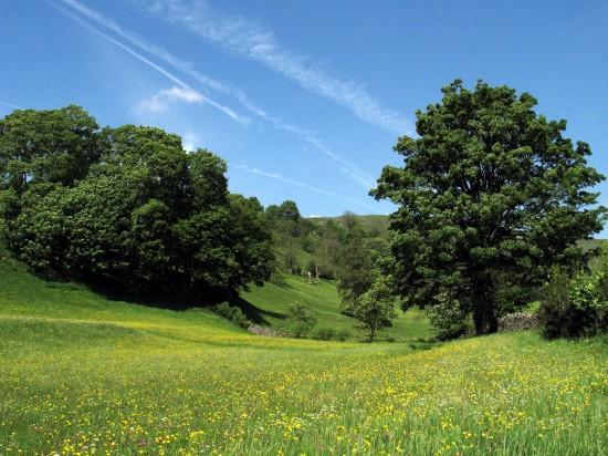 Muker-Meadows